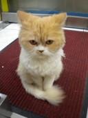 Sentinel cat