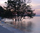 Mangroves by the shore