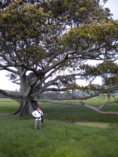 Darcy by the landmark tree