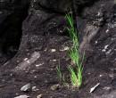 Green survivor Kiama NSW