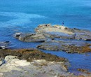 Rock platform near North Wollongong Beach NSW
