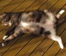 Sootie in the sun