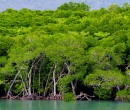 Mangroves Port Douglas Queensland