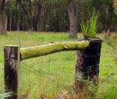 Fence posts near Budderoo National Park