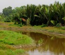 Local river seen while riding through southern Johor, Malaysia