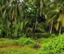 Palms seen while riding through southern Johor Malaysia