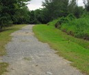 Bike track near the western end of Pulau Ubin