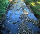 Byarong Creek Figtree