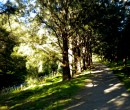 Cycling by Byarong Creek Figtree