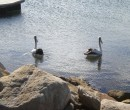 lake_illawarra_barrack_pt_01_ride_06