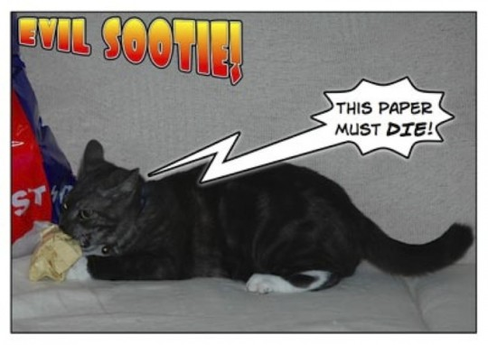 Sootie loves to kill paper balls