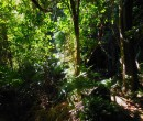 On the Mount Keira Ring Track